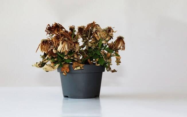 Entenda a relação entre as plantas murchas e energia negativa no ambiente