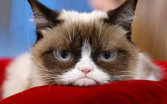 Grumpy Cat, a gata rabugenta, morreu aos 7 anos de idade