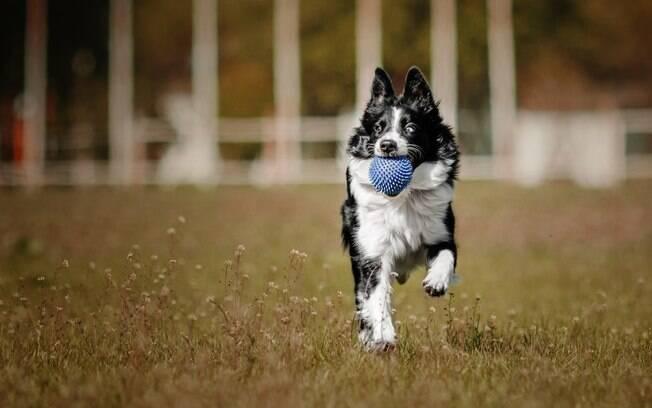 O verão é uma ótima época para passear com cachorro ao ar livre
