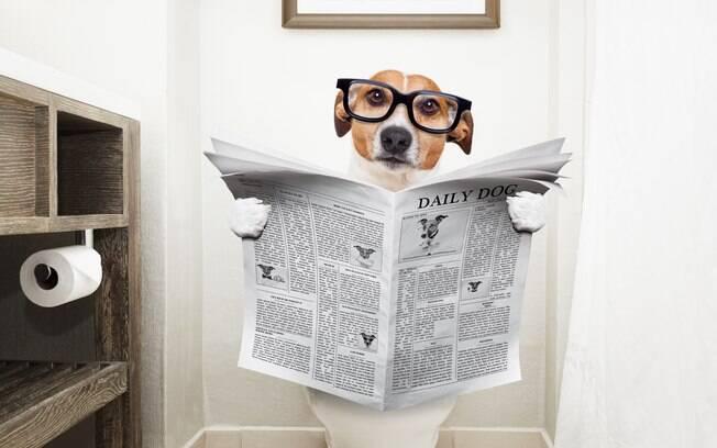 Os jornais são grandes aliados do adestramento e é preciso fazer um estoque deles