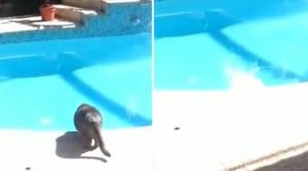 Tutor dá susto em gato que, desesperado, pula em piscina