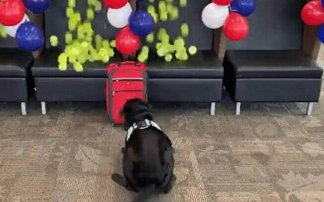Cão recebendo surpresa