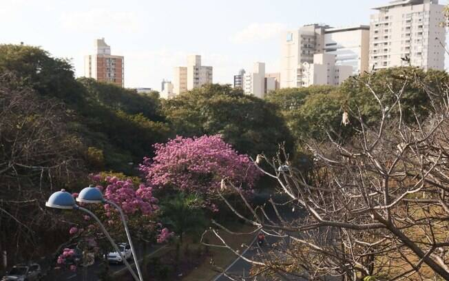Sexta-feira em Campinas terá predomínio de sol e máxima de 28°C