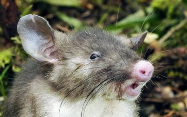 Oficial disse que ratos são uma ameaça no local e estavam roendo as embalagens da maconha e garrafas plásticas de bebida
