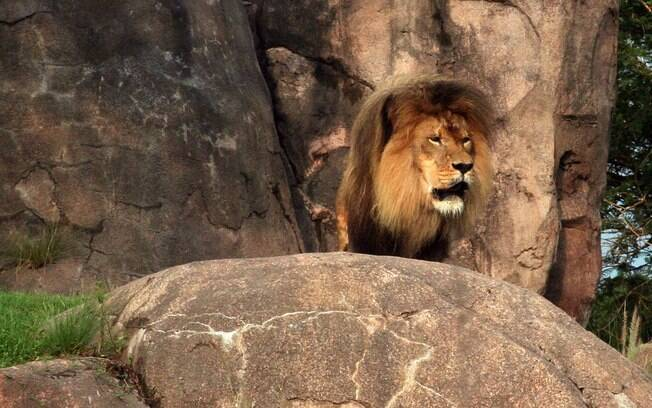 Dá para ver animais de pertinho no Kilimanjaro Safari