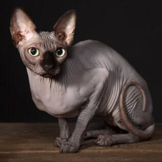 Sphynx - undefined