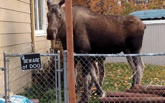 Que cachorro esquisito.