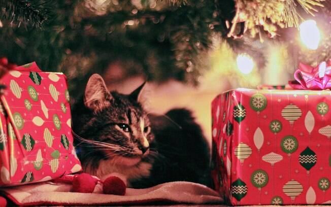 Confira o porquê das Sacolinhas de Natal serem o melhor presente