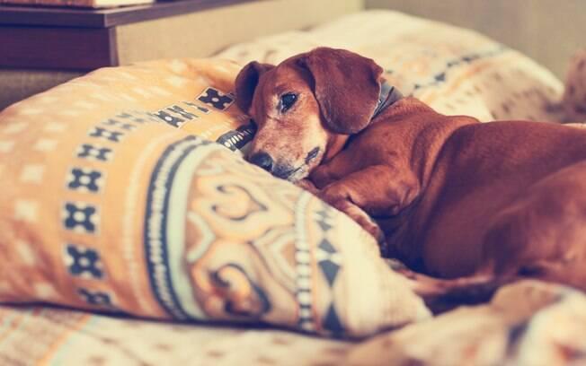 Dificuldade para urinar e defecar, indisposição e emagrecimento, são sinais de que o cão está sentindo dor