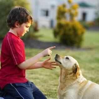 Labrador tem fama de ser uma raça amigável com crianças