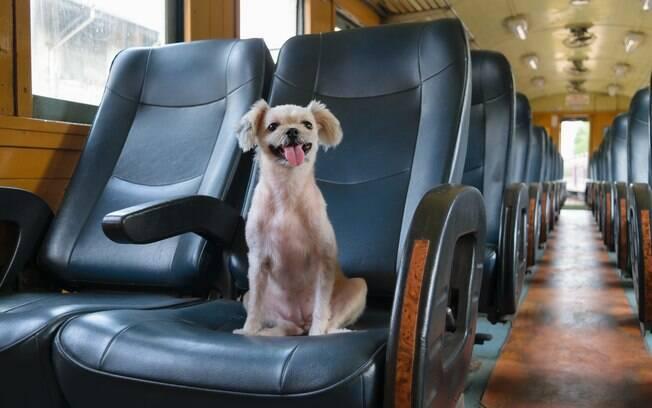 Os trens e metrô de São Paulos não permitem o transporte de animais, exceto cães-guias