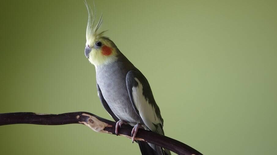 Os poleiros deve ser uteis para que as aves possam se exercitar sem machucar as patinhas