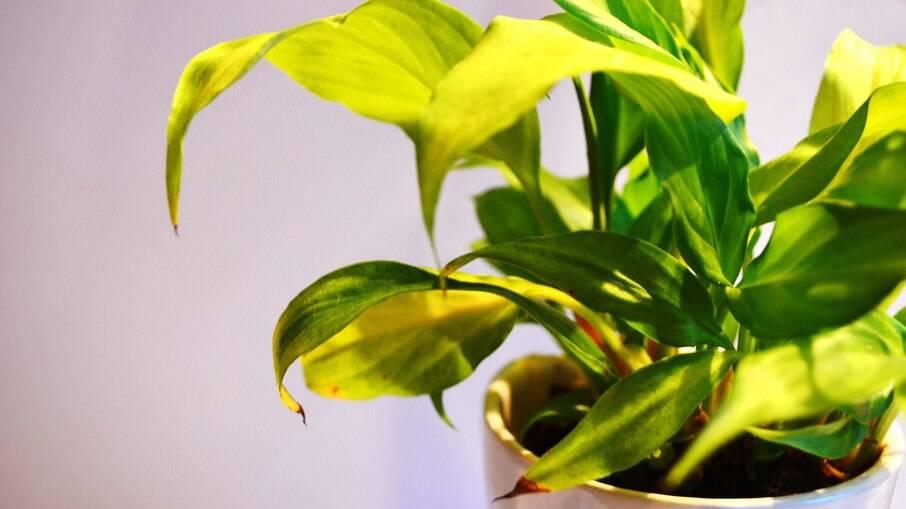 Além de trazer um pouco de natureza para dentro de casa, cuidar de plantas pode ser terapêutico