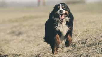 Lei que permite cachorros na praia é aprovada em Santos