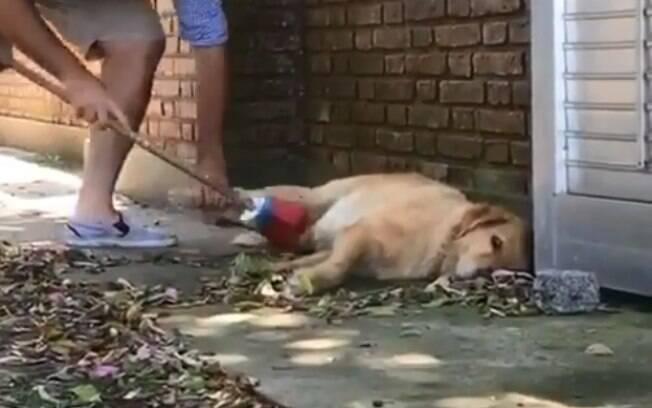 Lazy nem se move para seu dono  fazer suas atividades diárias