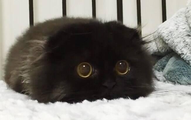 Gato com olhos gigantes.