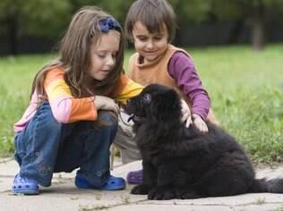 Entre as crianças, taxa de ferimentos relacionados a mordidas de cachorro é maior dos cinco aos nove anos