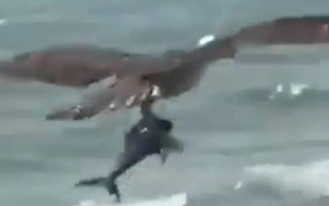 Águia e tubarão
