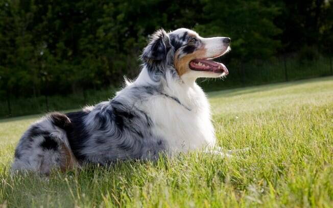 Antes de adotar um pet, é importante conhecer as raças de cães que se adaptam ao clima quente do país