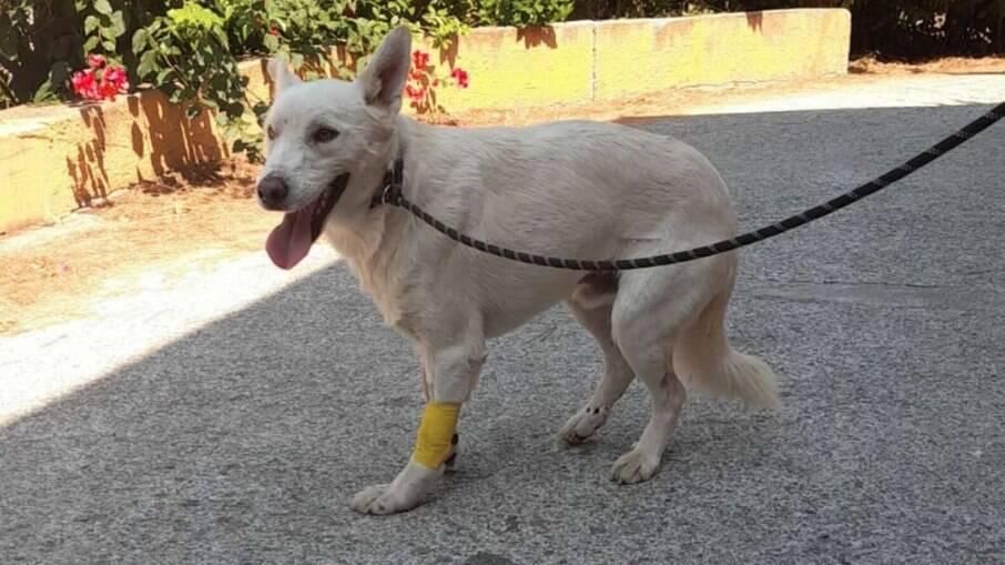 Ele teve apenas lesões leves e uma fratura na pata dianteira, ele ter sobrevivido foi considerado um milagre
