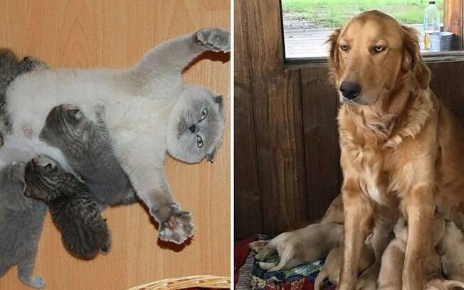 Vida de mamãe é difícil. E esses animais irão provar isso.