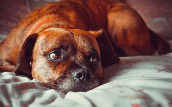 O câncer em cães é uma doença cruel e que às vezes não tem cura