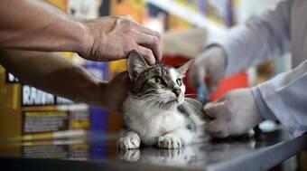 A importância da vacinação animal no Rio, por Nuno Vasconcellos