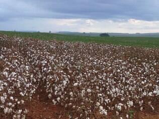 O mercado brasileiro de algodão fechou o mês de maio em alta, devido a entressafra de produção