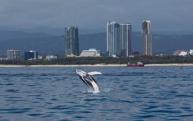 As baleias foram caçadas pelo país asiático em uma região preservada%2C o Mar de Ross%2C na Antártida (foto ilustrativa)