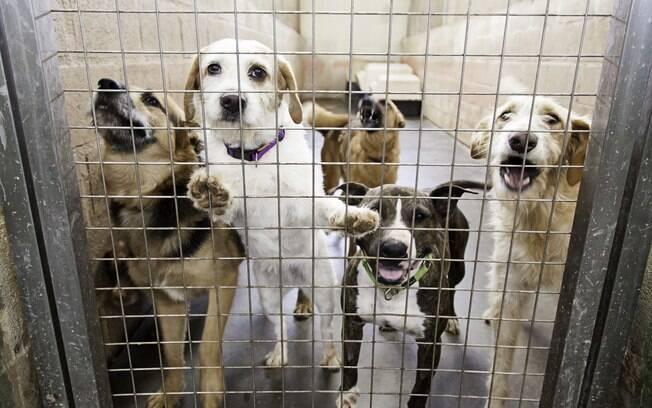 Apenas coelhos, gatos e cães resgatados, provenientes de abrigos poderão ser vendidos nas lojas da Califórnia