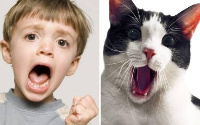 Um menino e um gatinho aparentemente querendo muito alguma coisa.