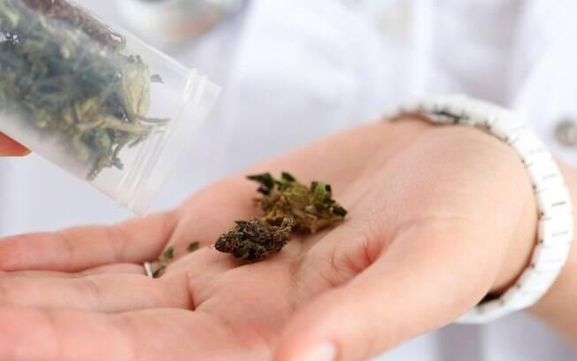 Maconha para uso medicinal já era permitida no Estado desde 2014 com baixa quantidade da substância psicoativa