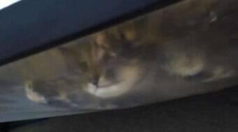 Garoto diz que tem um monstro na cama, e mãe acha gata