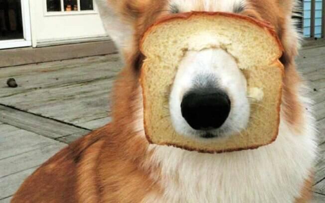 Poxa, ele queria apenas um pedaço de pão de forma.