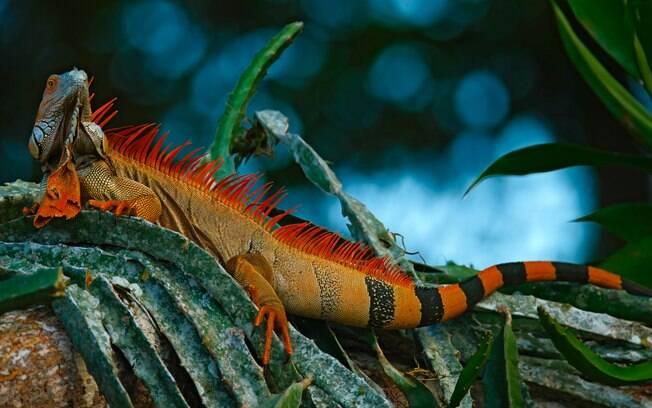 O que fazer na Costa Rica: a vida selvagem costarriquenha também é rica no interior do país e em suas várias reservas