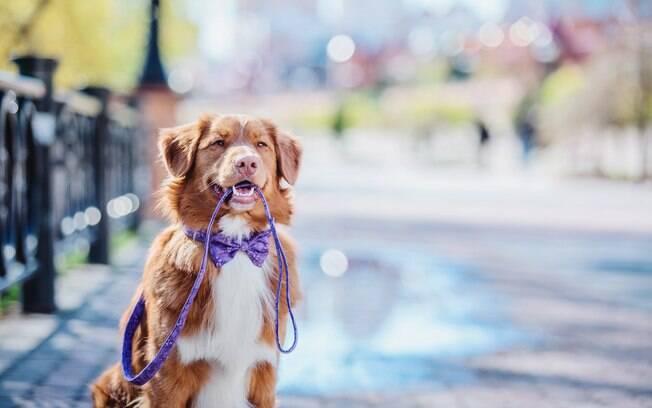 Confira dicas que vão te ajudar na escolha da melhor guia para o seu cachorro