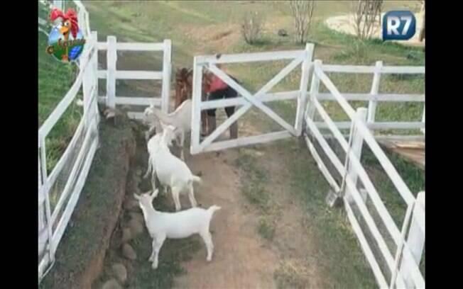 Só com o auxílio de Valesca é que a ex-garota de programa leva os animais ao pasto