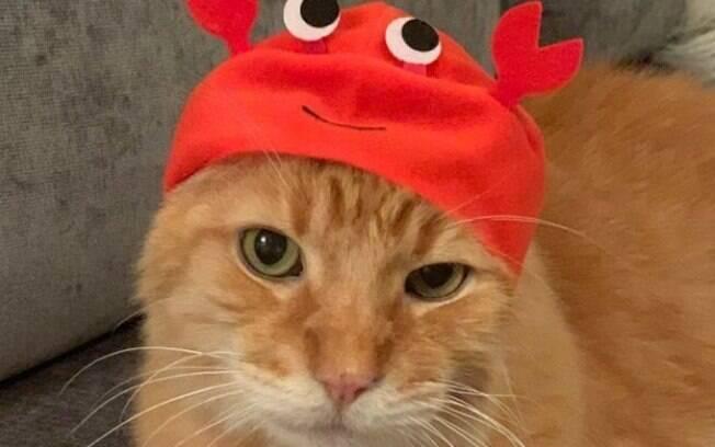 Chapéus para gatos são a nova moda no Reino Unido