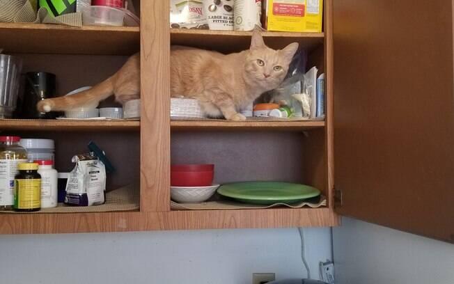 Oliver dentro de armário da cozinha