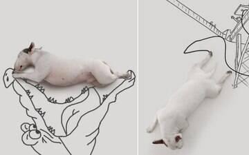 Designer transforma dia-a-dia do cão em grandes aventuras. Veja fotos