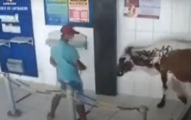 Boi invadiu lotérica no agreste pernambucano e assustou quem ia atrás do auxílio de R$ 600