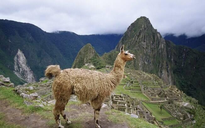 As lhamas marcam a paisagem de Machu Picchu