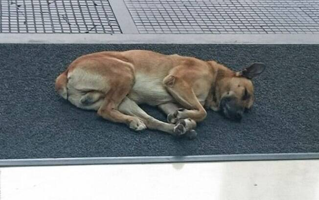 O cachorro de rua argentino começou a seguir a aeromoça alemã