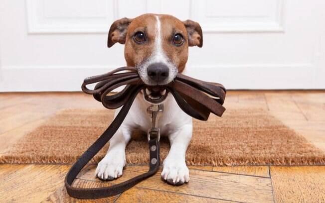 Cachorro com Lua em Libra: saiba a compatibilidade com seus tutores - parte II