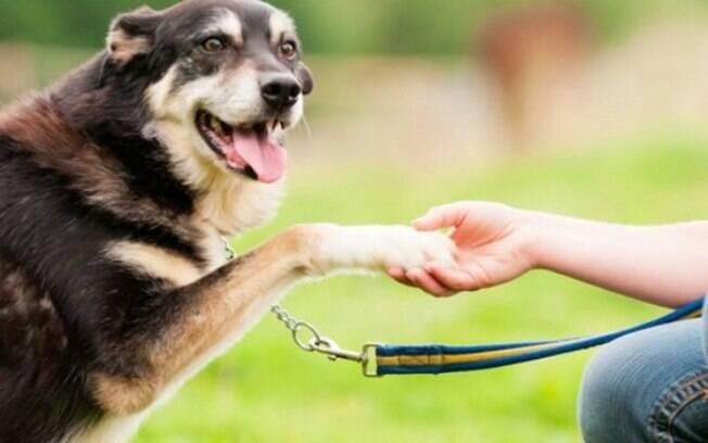 É comum os donos acharem que adestramento e terapia comportamental são sinônimos, mas são completamente diferentes