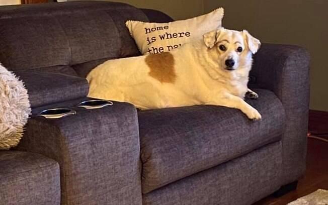 Cão preocupado