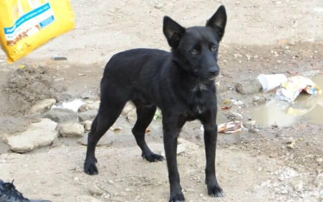 ONG busca interessados em adotar os animais que foram deixados para trás