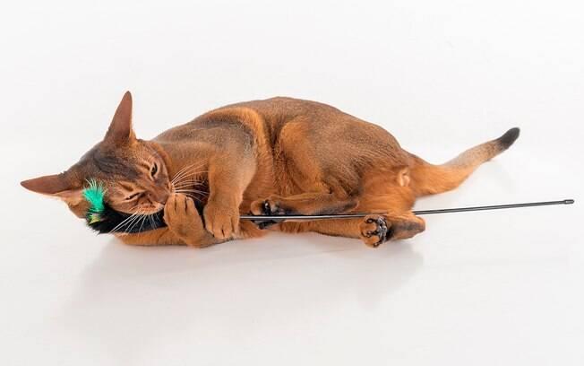 Um gato também foge para caçar, então é importante ter brinquedos que reproduzam essa atividade em casa.