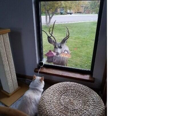 Sochi se difere dos outros gatos por ser sociável e fazer amizade rapidamente