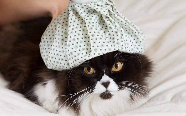 A rinotraqueite é a doença que causa gripe em gatos